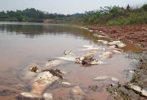 首个农 药污水处理系统亮相珥陵